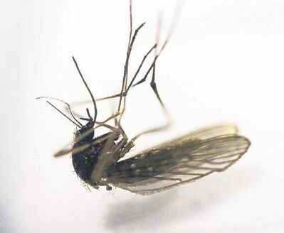 Mosquito counts for this week are lower than last week.