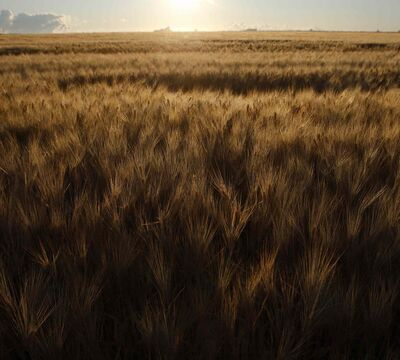 Farm cash receipts in Manitoba are down 5.2 per cent compared to the first three months of 2013, according to new Statistics Canada data.
