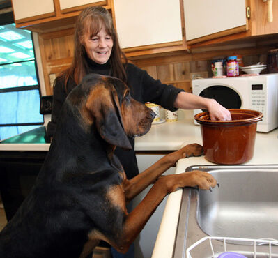 Denise Rayzor has one of her pet bloodhounds, Mr. Hoover, check out a batch of crockpot dogfood at her Palisade, Colo., home Jan. 20, 2012. As people are getting choosier about what they eat, they're insisting on providing their pets with more nutritious foods.