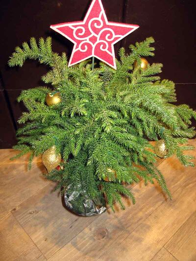This Norfolk Island pine has a jaunty red star as a tree top. Photo taken at Canada Safeway, Corral Centre.