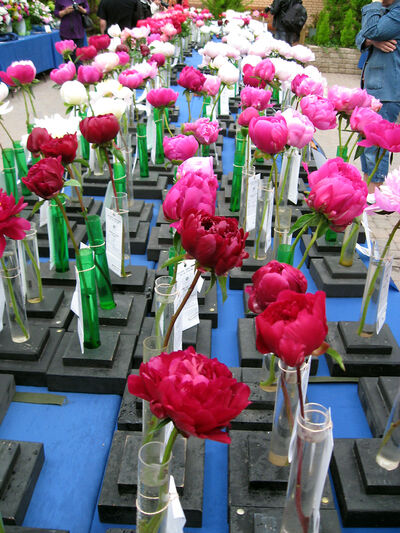 Several tables were loaded with individual peony stems.