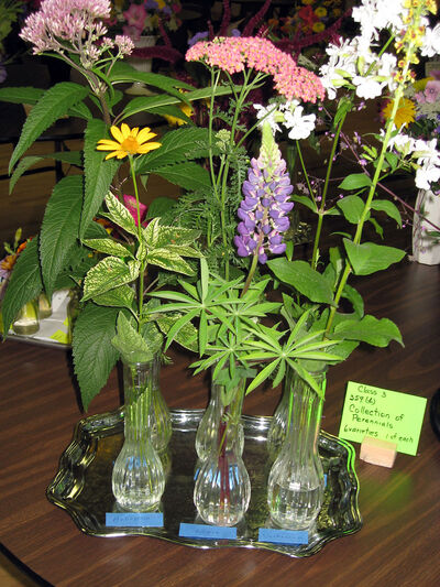 An exhibit of cut flowers is very attractive when staged properly.