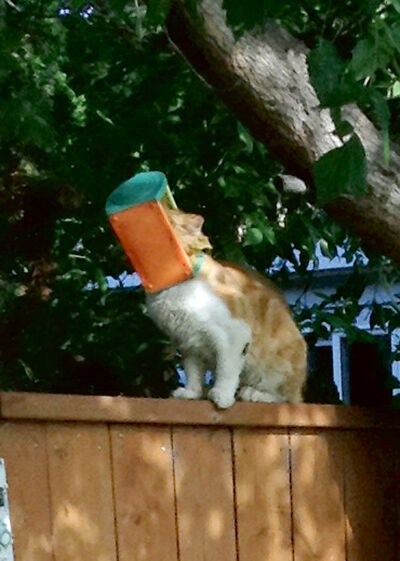 A cat with its head stuck in a bird feeder was spotted on a Cornwallis Crescent fence on Wednesday morning.