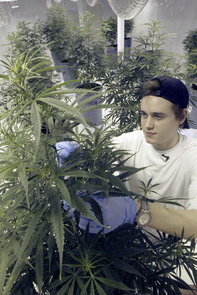 John Arbuthnot of Delta 9 says the first crop of medical pot is being shipped.