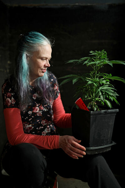Laurel Roberts with one of her cannabis plants in her home in Hamiota. Roberts grows medicinal cannabis for use to combat chronic migraines. Her home insurer has told her they will cancelling her insurance because she grows more plants than they allow for their insurance. Roberts has a Health Canada permit to grow up to 20 plants. (Tim Smith/The Brandon Sun)