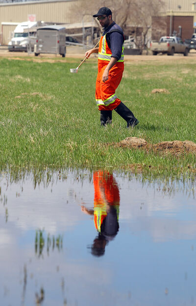 Biology student Josh Tashman does a mosquito larvae count in a large puddle along Parker Boulevard earlier this week.