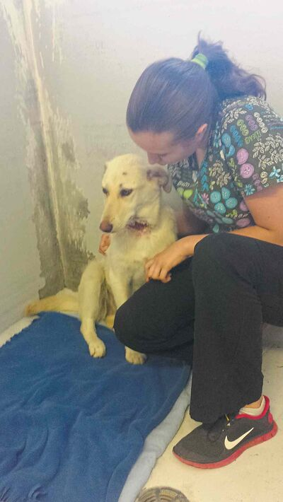 Lemon Lime, a nine month old lab puppy was found roaming by animal control services in a rural area, covered with hundreds of ticks and with a clean wound across her throat.