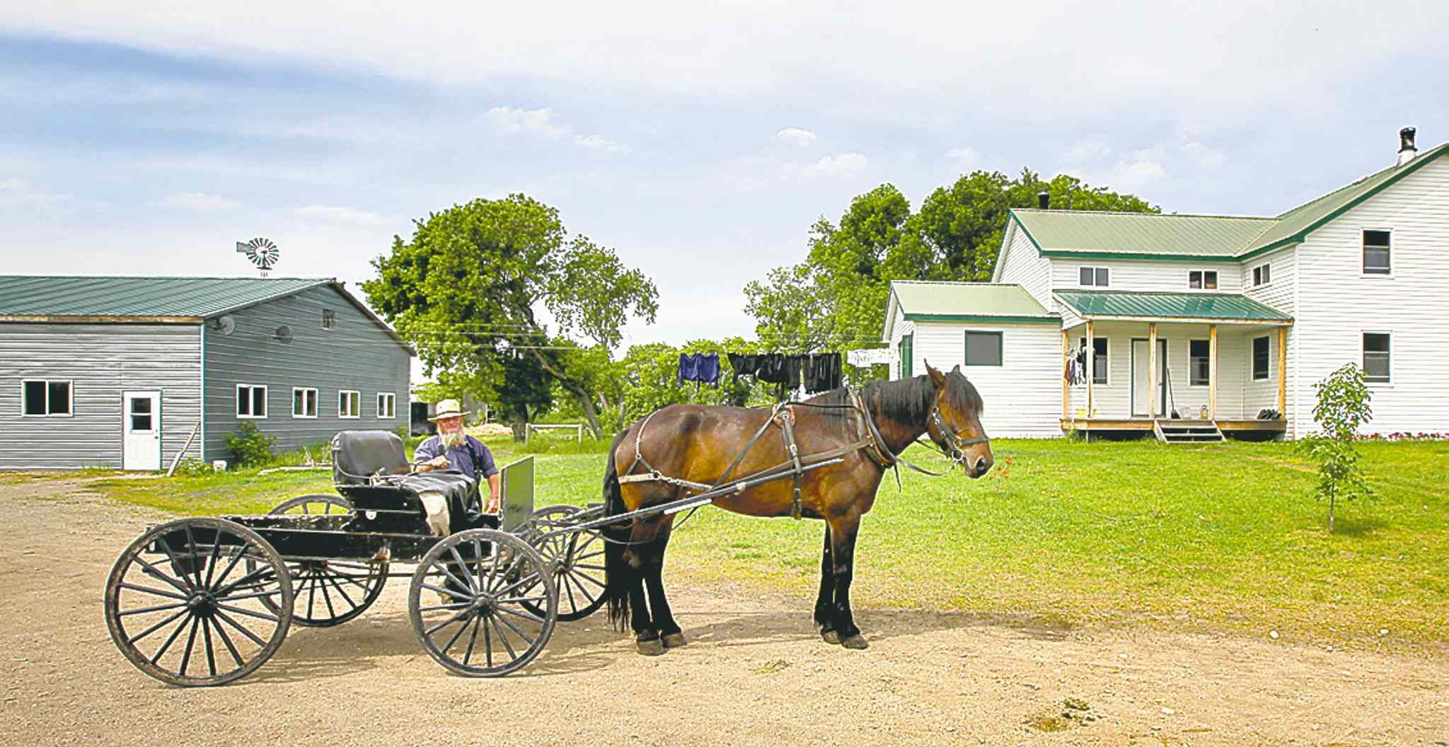 A member of the Old Order Mennonite community drives his horse-drawn buggy from his yard.