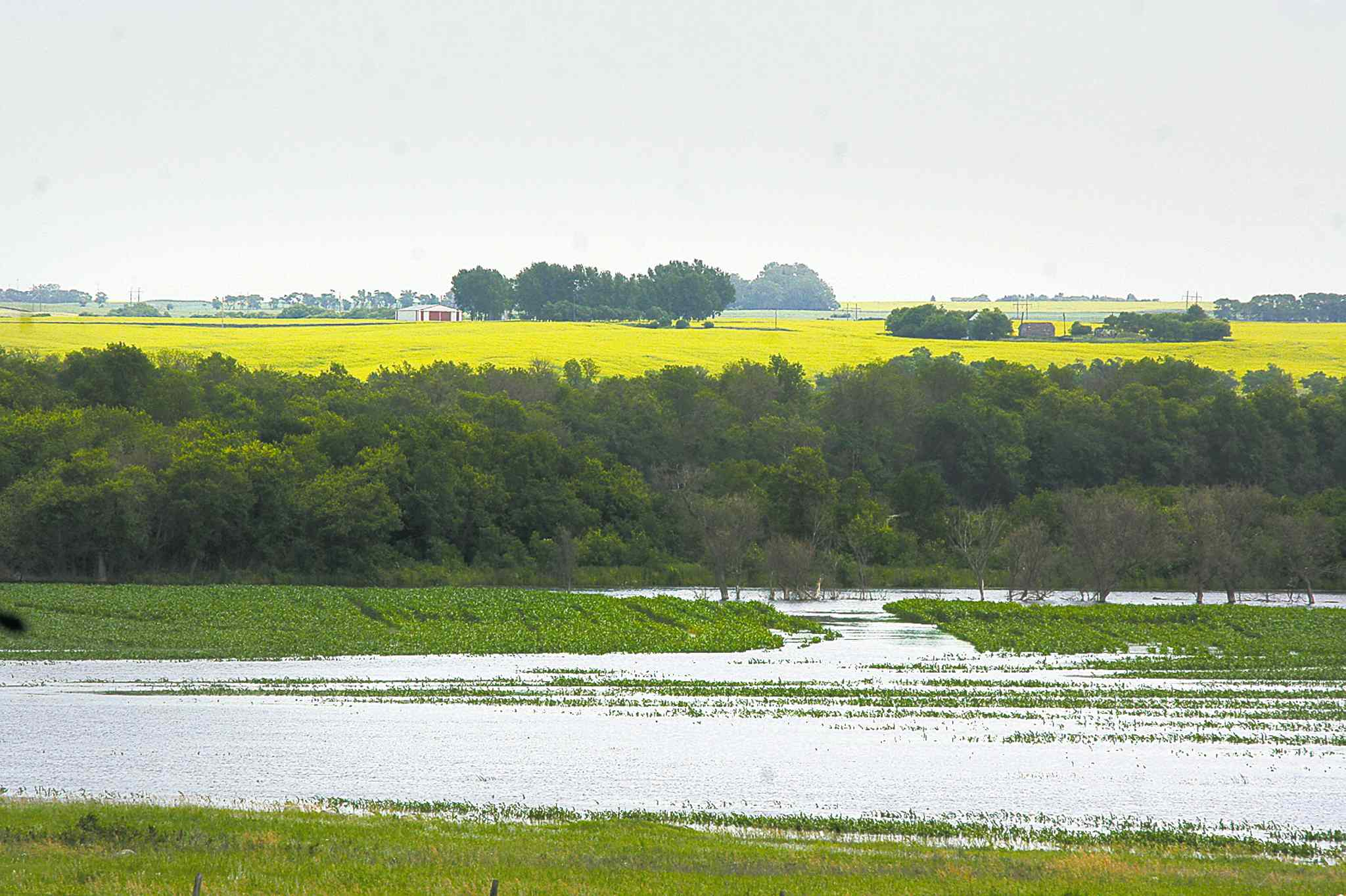 Rows of crops near Brandon are left underwater after the Assiniboine River breached its banks in 2011.