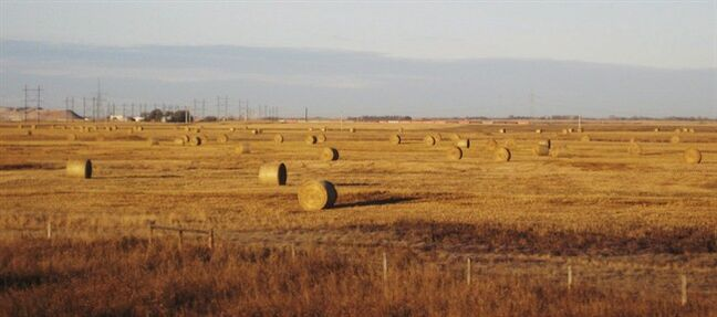 Hay bales sit in prairie wheat fields outside Saskatoon, Sask., on Oct. 19, 2010. A move is afoot to get hay from the Prairies to drought-stricken parts of Ontario and Quebec. The HayEast 2012 program consists of farm and livestock groups from Alberta and Saskatchewan working in partnership with the Ontario Federation of Agriculture, Mennonite Disaster Services and the Quebec Farmers' Association. THE CANADIAN PRESS/AP - Rob Gillies