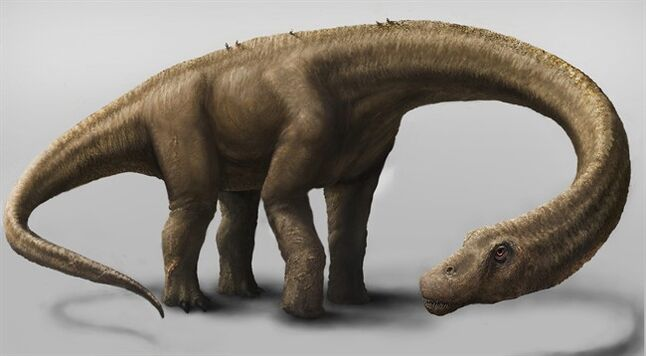 This undated artist rendering shows the Dreadnoughtus. THE CANADIAN PRESS/AP, Carnegie Museum of Natural History, Mark A. Klingler