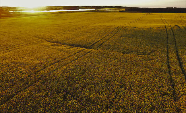A portrait of a canola field Matthew Johnson captured with his drone near Belmont.