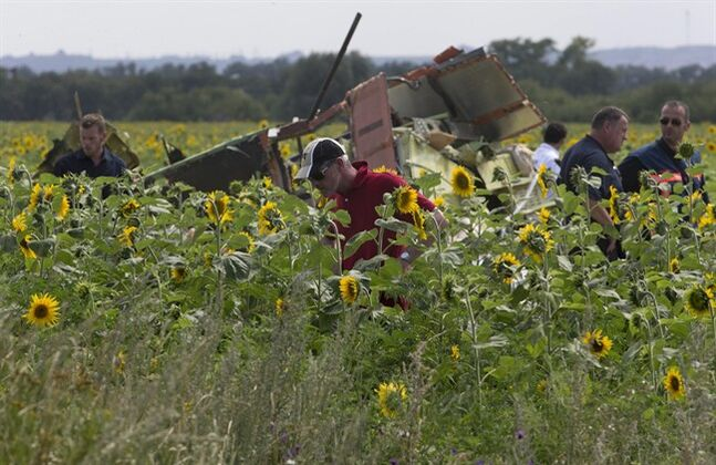 Dutch and Australian investigators examine pieces of the crashed Malaysia Airlines Flight 17 in the village of Rassipne, Donetsk region, eastern Ukraine Friday, July 25, 2014. (AP Photo/Dmitry Lovetsky)