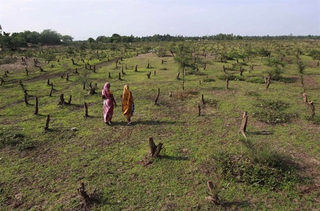 Indian women stand near the stems of trees chopped for the proposed $12 billion steel plant by South Korean conglomerate Posco at Noliashai in Jagatsinghpur district of Orissa state, India, on July 25, 2011. THE CANADIAN PRESS/AP, Biswaranjan Rout