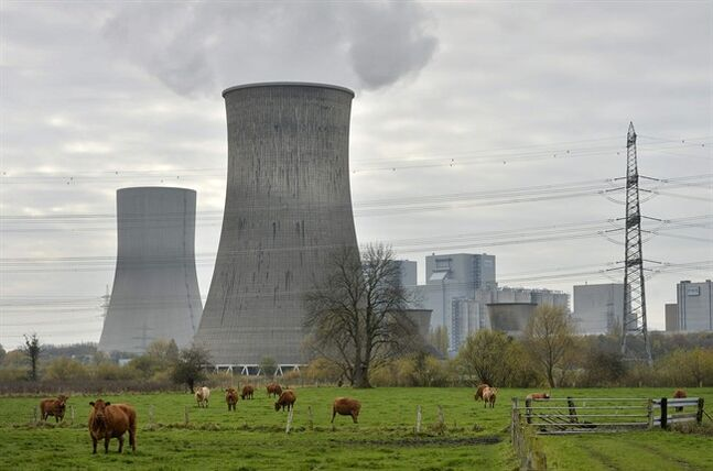 FILE - In this Nov. 14, 2013 file photo cows are standing in front of the latest coal-fired power station of German power provider RWE in Hamm, Germany. The share of electricity generated from coal rose in Germany last year as the country seeks to achieve its ambitious aim of switching off all nuclear power plants by 2022. Industry figures published Tuesday, Jan. 7, 2014, show that bituminous coal and lignite together contributed 45.5 percent of Germany's gross energy output in 2013, up from 44 percent the previous year. (AP Photo/Martin Meissner, File)