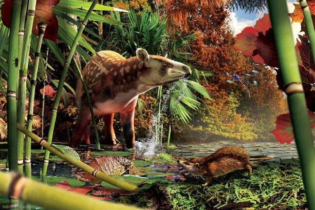 The tapiroid Heptodon drinks in the shallows, while the small proto-hedgehog Silvacola acares stalks a green lacewing (Pseudochrysopa harveyi) in the foreground. This is a reconstruction of the early Eocene (52 million-year-old) fauna that inhabited the rainforest around a northern British Colombia lake. THE CANADIAN PRESS/HO, Illustration by Julius T. Csotonyi