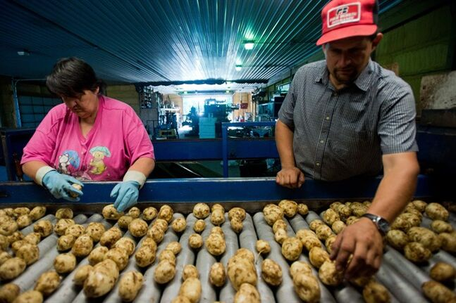 In this photo taken July 18, 2014, Elaine Talicska and Tom VanOchten sort potatoes as they roll down to fill 10-pound bags for small markets at the VanOchten farm, in Hampton Township, Mich. The Labor Department reports on U.S. producer prices -- the prices that companies receive for their goods and services -- in July on Friday, Aug. 15, 2014. (AP Photo/The Bay City Times, Yfat Yossifor)