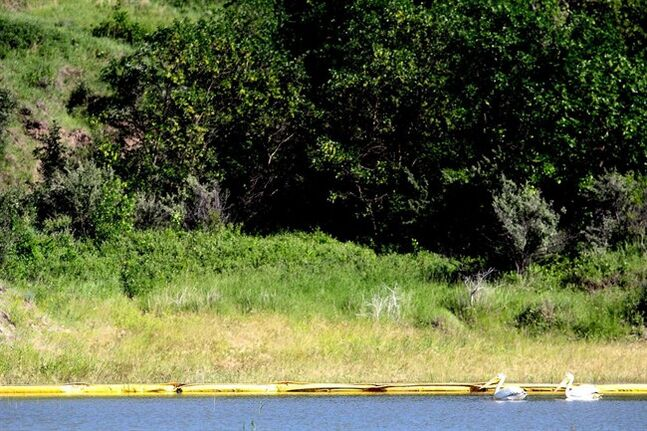 In this July 10, 2014, photo, pelicans pass a containment boom on the edge of Bear Den Bay, close to the location of a saltwater pipeline spill near Mandaree, N.D. (AP Photo/Tyler Bell)