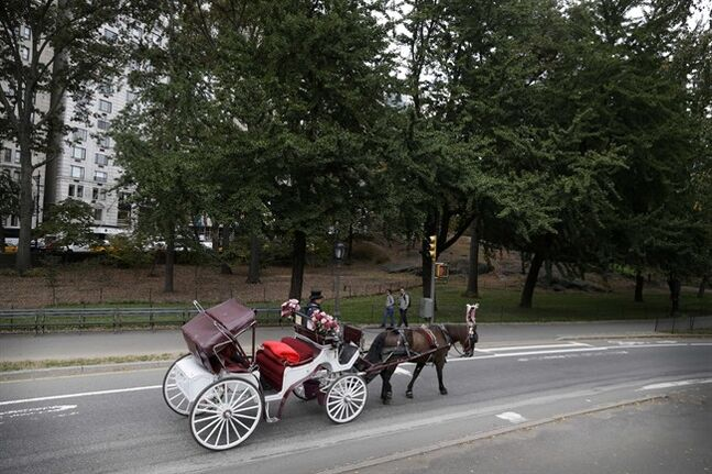 FILE - In this Oct. 23, 2013, file photo, a horse-drawn carriage heads along a road in New York's Central Park. Regulators are investigating allegations that one of New York's embattled carriage horse drivers tried to evade industry regulations by disguising an aging horse with a mild breathing ailment as another horse half its age. New York Mayor Bill de Blasio has vowed to ban the carriages, calling them inhumane. (AP Photo/Seth Wenig, File)