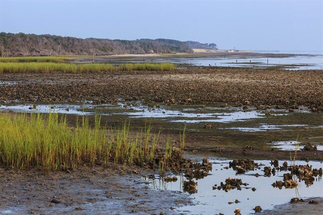 This July 29, 2014 photo provided by the Texas Parks and Wildlife Department shows tide pools at Matagorda Bay, Texas at Powderhorn Ranch. The Texas Parks and Wildlife Foundation is leading the purchase of the 17,300-square-foot Powderhorn Ranch 75 miles northeast of Corpus Christi. It is largely financed by a fund created by BP and Transocean in the wake of the Deepwater Horizon oil spill. (AP Photo/Texas Parks and Wildlife Department, Earl Nottingham)