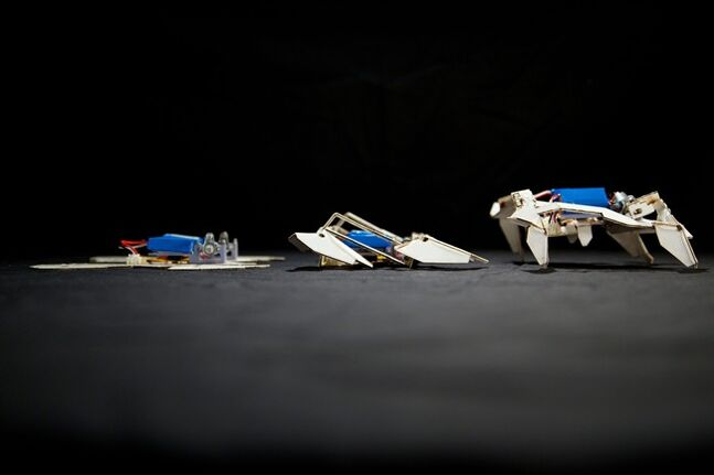 """This undated handout image provided by the journal Science shows a self-folding crawling robot in three stages. In what may be the birth of cheap, easy-to-make robots, researchers have created complex machines that transform themselves from little more than a sheet of paper and plastic into walking automatons. Borrowing from the ancient Japanese art of origami, children's toys and even a touch of the """"Transformers"""" movies, scientists and engineers at Harvard and MIT created self-assembling, paper robots. They are made out of hobby shop materials that cost about $100. After the installation of tiny batteries and motors, the paper robot gets up, folds itself into the proper shape and is ambling across the table in just four minutes. (AP Photo/Seth Kroll, Wyss Institute - Science)"""