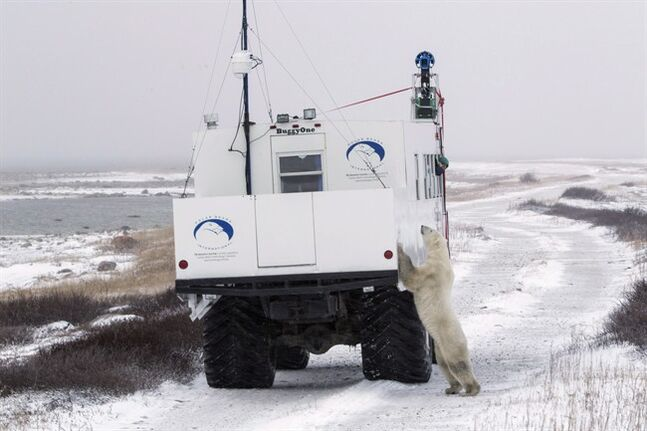 A polar bear investigates a vehicle recording imagery for Google Maps in Churchill, Man. THE CANADIAN PRESS/HO, Google