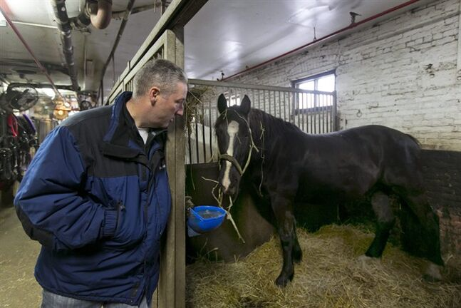 FILE - In this Jan. 28, 2014 file photo, carriage horse owner Stephen Malone looks in on his horse Tucker in his stall at New York's Clinton Stables. Malone said Monday, June 9, 2014. that there were no injuries to the horse or any people when a startled carriage horse took a jaunt around New York's Central Park. (AP Photo/Richard Drew, File)