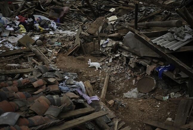 A rabbit sniffs around the rubbles following a massive earthquake in the town of Longtoushan in Ludian County in southwest China's Yunnan Province Tuesday, Aug. 5, 2014. Rescuers raced Tuesday to evacuate villages near rising lakes formed by landslides, complicating relief efforts following a strong earthquake in southern China that killed more than 300 people and has left thousands homeless. (AP Photo/Andy Wong)