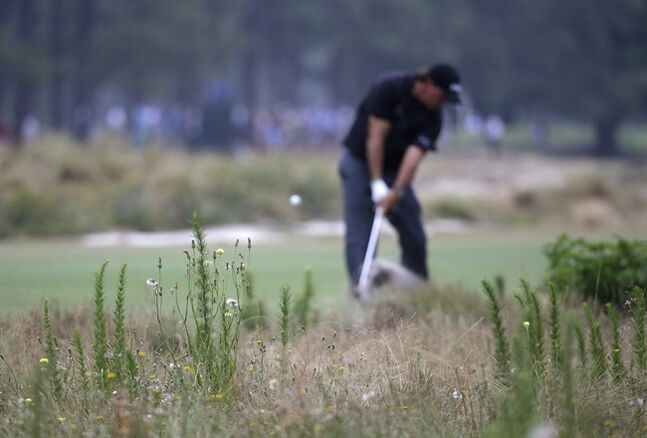 Phil Mickelson hits out of the native area on the 13th hole during the first round of the U.S. Open golf tournament in Pinehurst, N.C., Thursday, June 12, 2014. (AP Photo/David Goldman)