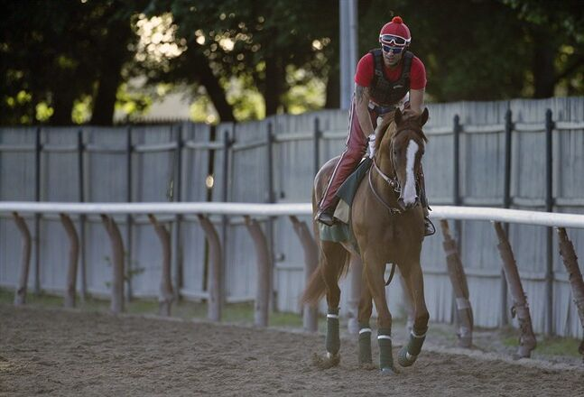 Kentucky Derby and Preakness winner California Chrome jogs around the track with exercise rider Willie Delgado up at Belmont Park, Monday, June 2, 2014, in Elmont, N.Y. California Chrome will attempt to become the first Triple Crown winner since Affirmed in 1978 when he races in the 146th running of the Belmont Stakes on Saturday. (AP Photo/Julie Jacobson)
