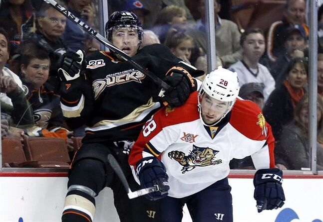 Florida Panthers left wing Garrett Wilson, right, checks Anaheim Ducks defenseman Stephane Robidas into the boards during the first period of an NHL hockey game in Anaheim, Calif., Sunday, March 23, 2014. Robidas has signed a US$9-million, three-year deal with the Toronto Maple Leafs, who continue to overhaul their blue line. THE CANADIAN PRESS/AP/Danny Moloshok