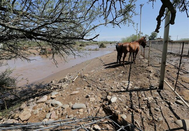 Horses wait to be evacuated from an area where flash flood waters overran Skunk Creek, Tuesday, Aug. 19, 2014, in New River, Ariz., just northwest of Phoenix. (AP Photo/Matt York)