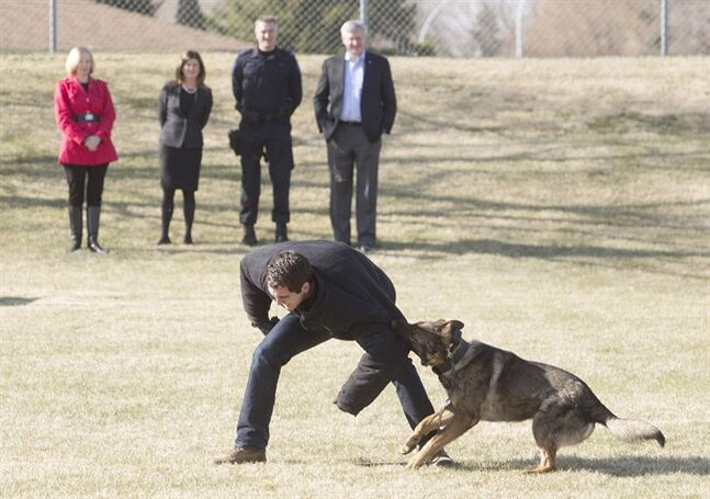 Laureen Harper, back left to right, Minister of Health Rona Ambrose, Sgt. Bart Lawczynski and Prime Minister Stephen Harper watch a police dog demonstration during a photo op at the Edmonton Police Service Canine Unit in Edmonton on Monday, May 12, 2014. THE CANADIAN PRESS/Jason Franson