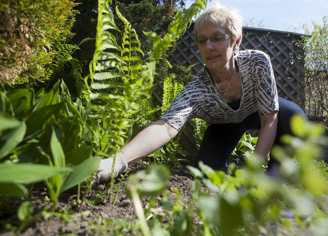 Eileen Boxall tends to her backyard garden in Toronto on Sunday, May 25, 2014. THE CANADIAN PRESS/ Jesse Johnston