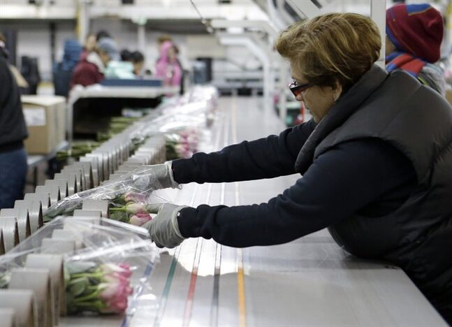 In this Thursday, Feb. 7, 2013, photo, workers at a floral import company prepare flowers for distribution to flower resellers throughout the country, in Miami. A measure of U.S. wholesale prices rose in February by the most in five months, pushed higher by more expensive gas and pharmaceuticals. But outside those increases, inflation was mild. The producer price index grew a seasonally adjusted 0.7 percent in February from January, the Labor Department said Thursday, March 14, 2013. That's up from 0.2 percent in the previous month. Wholesale gas prices increased 7.2 percent. (AP Photo/Alan Diaz)
