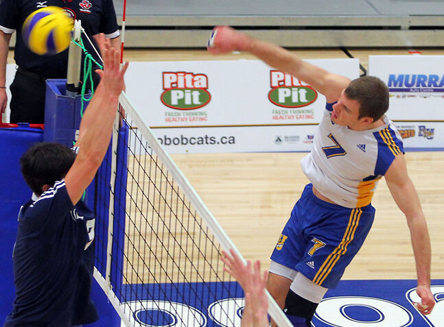 BU Bobcats right side Sebastien Steigmeier hammers a kill against Trinity Western in Canada West conference action on Feb. 1.
