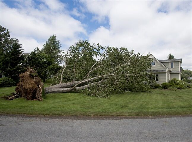 A large uprooted tree rests against a house in Oakland, N.S. on Saturday, July 5, 2014. Thousands of homes and businesses were without power as heavy rains and high winds from tropical storm Arthur buffeted the region.THE CANADIAN PRESS/Andrew Vaughan