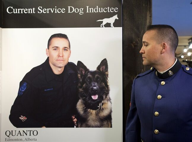 Edmonton police officer Const. Matthew Williamson looks over at a photo of himself posing with his service dog Quanto during the 46th annual Purina Animal Hall of Fame in Toronto on Monday, May 5, 2014. Quanto died during a altercation with a suspect in the line of duty. THE CANADIAN PRESS/Nathan Denette