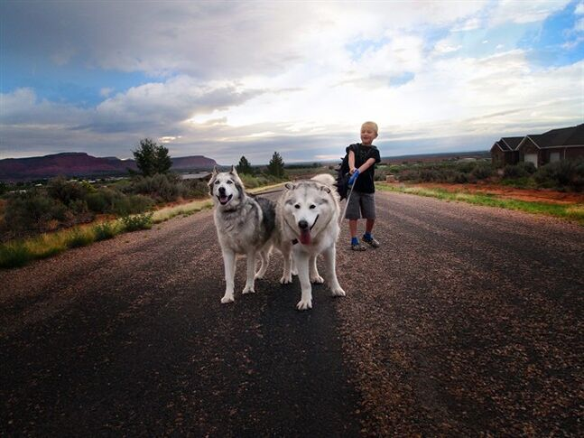 This Aug. 19, 2014 photo provided by Jill Williams shows kindergartner Harry Williams, 7, with his dogs Flora and Gandalf on his way to the bus stop on first day of school in Kanab, Utah. For millions of dogs across the country, summer is gone and so are their best buddies. Most dogs object for a while but eventually adjust to the new hours. But millions of others will feel abandoned, panicky, sad and unable to cope as they look for ways to lash out. (AP Photo/Jill Williams)