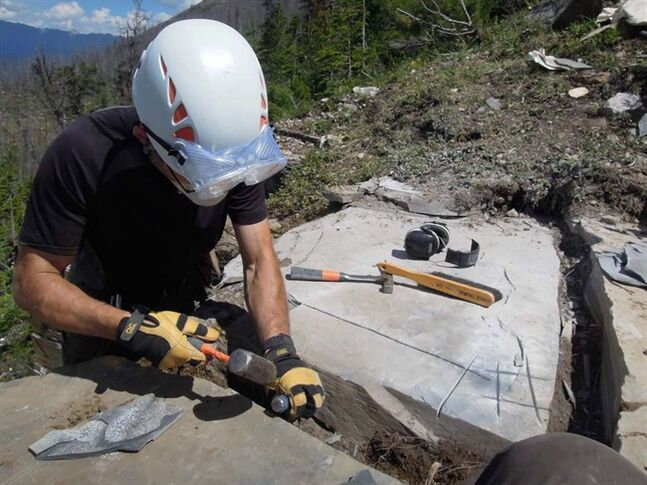 A worker extracts fossils at a fossil discovery site in a handout photo. A team of researchers has discovered what they're calling an astonishing fossil site in a B.C. mountain park that has revealed never-before-seen species from half a billion years ago.THE CANADIAN PRESS/HO-Gabriela Mangano
