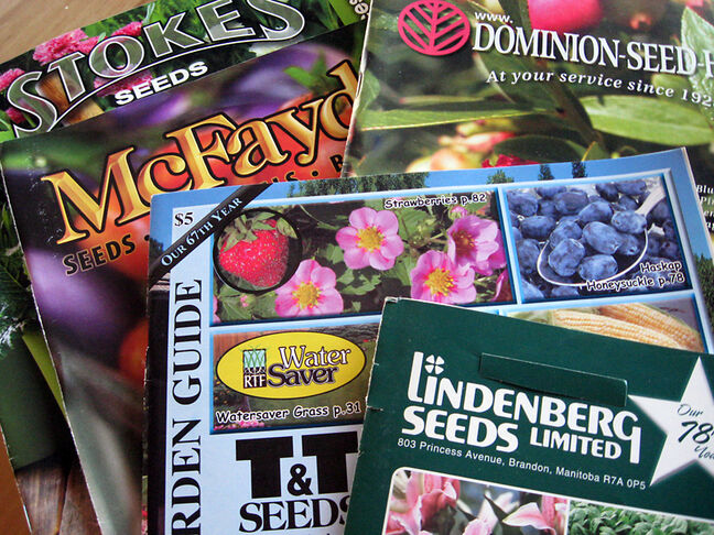 All seed houses have catalogues; most are free or free with a purchase.