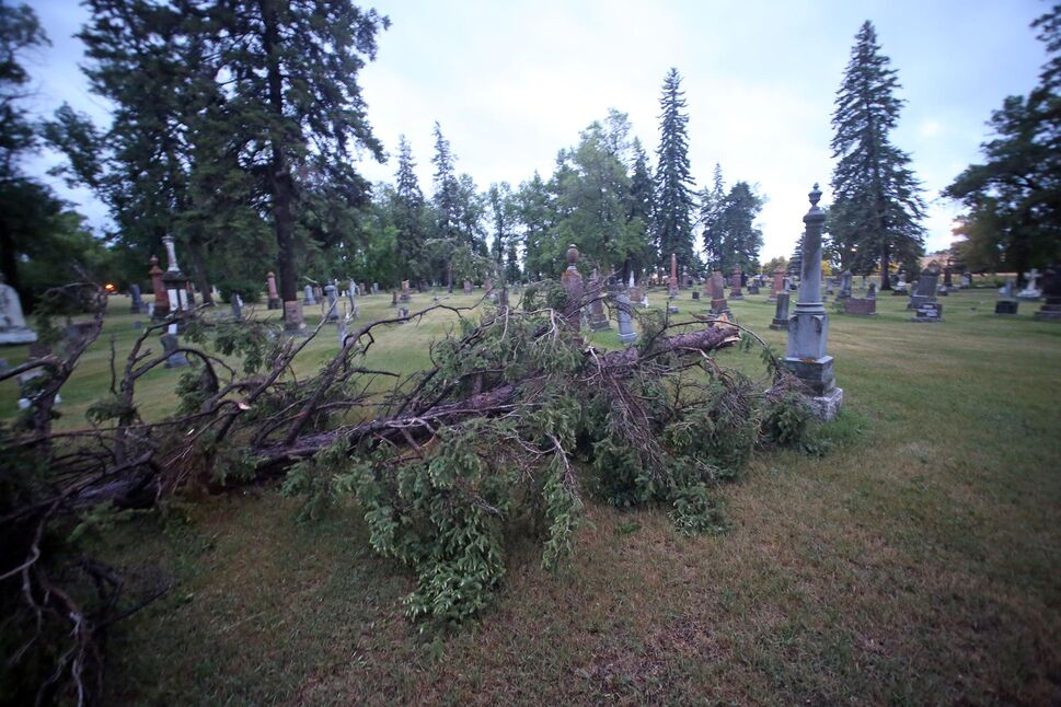 A broken tree lies in the Brandon Municipal Cemetery following Sunday's storm. On Monday morning several broken branches were visible scattered throughout the cemetery. (Matt Goerzen/The Brandon Sun)
