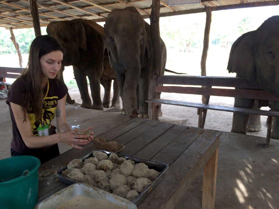Visitors help make rice balls for the facility's older elephants, who have lost most of their teeth and can't eat their regular diet. (Colin Corneau/Brandon Sun)