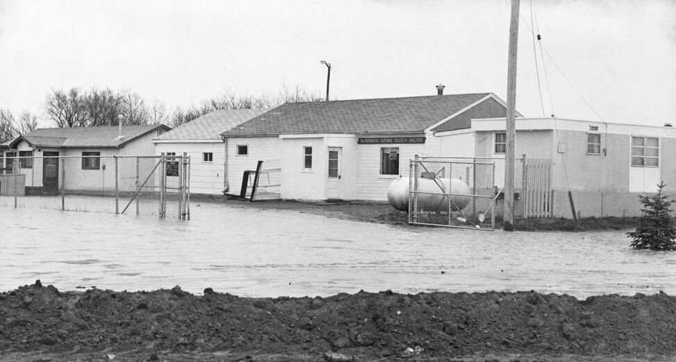 The Brandon Humane Society, at its previous location in Eleanor Kidd Park, during the 1976 flood.
