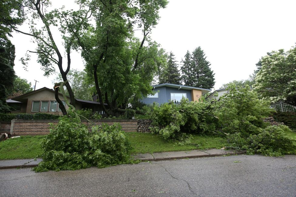 Fallen trees and branches line Ross Avenue in Brandon after high winds brought them down on Sunday.