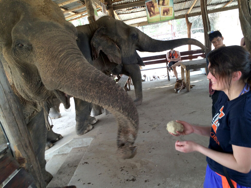 Visitors to the Elephants World sanctuary help feed the facility's older elephants, who have lost most of their teeth and can't eat their regular diet. Patrons of the rescue facility learn about interacting ethically as a tourist with Thailand's national animal, as well as putting in a little labour to help care for the gentle giants.