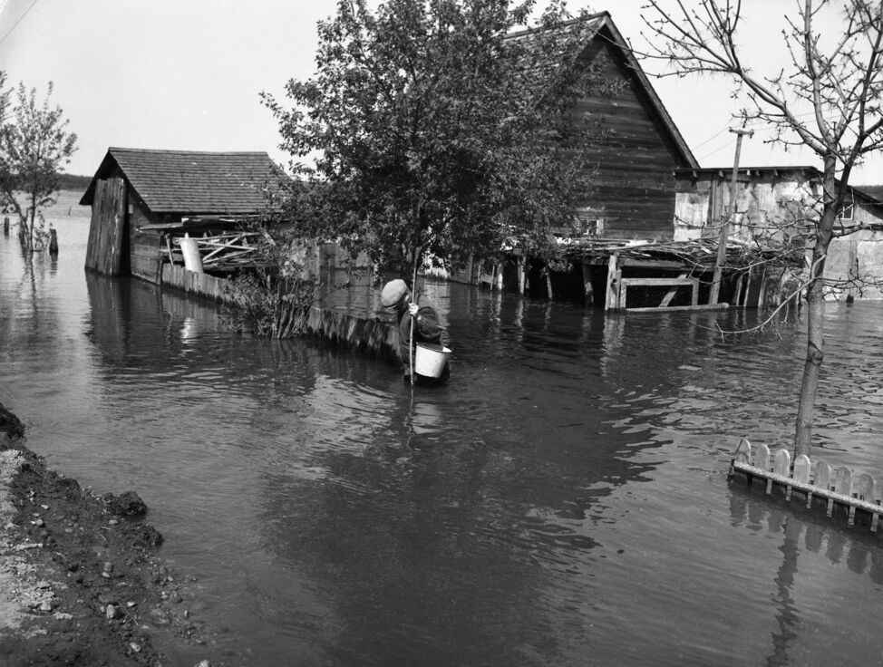Floodwaters were precisely waist-high in this Brandon yard during the flood of 1954.