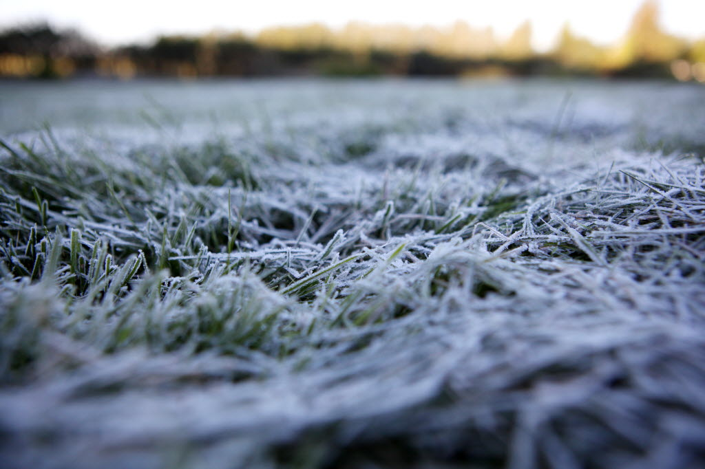 Frost clings to grass in a garden at The Brandon Research Centre.