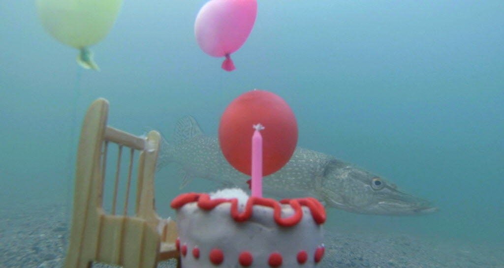 Filmmaker Michael Maryniuk found out the hard way jackfish don't like party balloons during his Deep Bay Residency at Clear Lake.